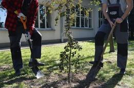 W firmie KISAN #sadziMy drzewka